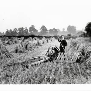 Harvest time using a Reaping Machine, 1932