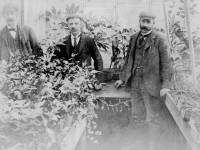 Mizen Brothers nursery, Eastfields, Mitcham