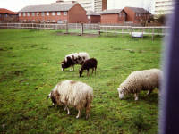 Deen City Farm, Church Road