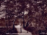 Wimbledon Common: Pathway