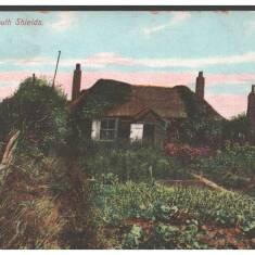 The Nest, South Shields