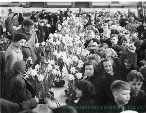 Flower bulb show in Hereford's Town Hall