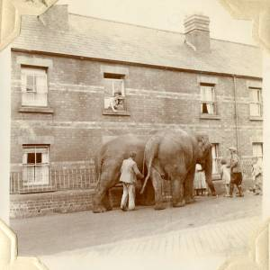 CJS003 Elephants, Millpond Street, Ross-on-Wye, 1938.jpg