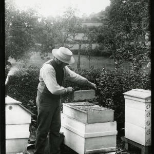 Man removing frame from hive