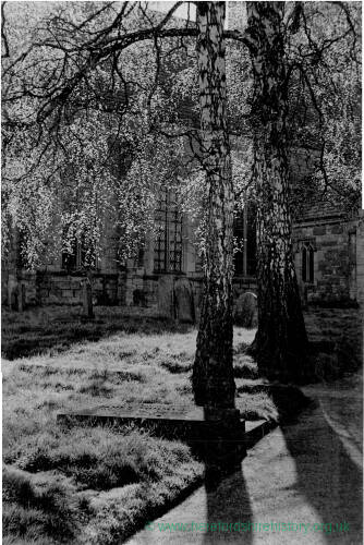 172 - Two silver birch trees in Ross churchyard