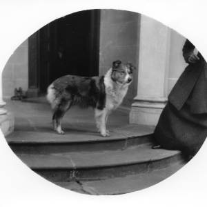G36-220-13 Collie type dog on steps of The Weir [same as G36-220-05].jpg