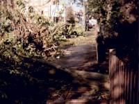 London Road, Mitcham:  Storm Damage