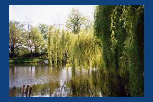 The Canons, Mitcham:  Pond in the grounds