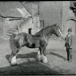 G36-020-02 Man holding a heavy horse in a farmyard with steps behind.jpg