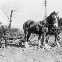 Farmers of their time ploughing at Robbins Island