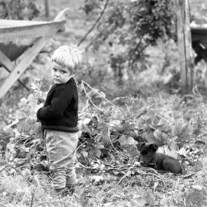 Little Blonde Boy with a Black Puppy in a Hop Yard in Marden, Herefordshire 1967