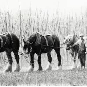 Ploughing the Hop Field