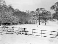 Mitcham Common in Winter