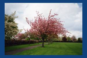 The Canons, Mitcham: Trees in the grounds