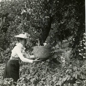 Woman taking a swarm of bees