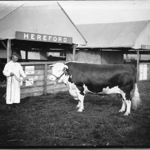 G36-042-16 Rob Roy with handler in long overall outside shed labelled Hereford .jpg