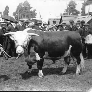 G36-050-10 Bull with large group of men.jpg