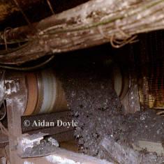 Underground Coal Belt