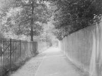 Cold Blows Lane in Summer looking west.