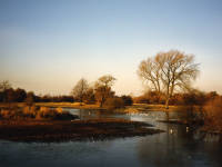 Seven Islands Pond in winter, Mitcham Common