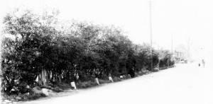 Plough Lane, Wimbledon