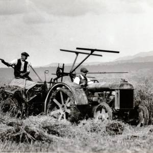 Tractor and self binder cutting corn at Harvest, Mathon