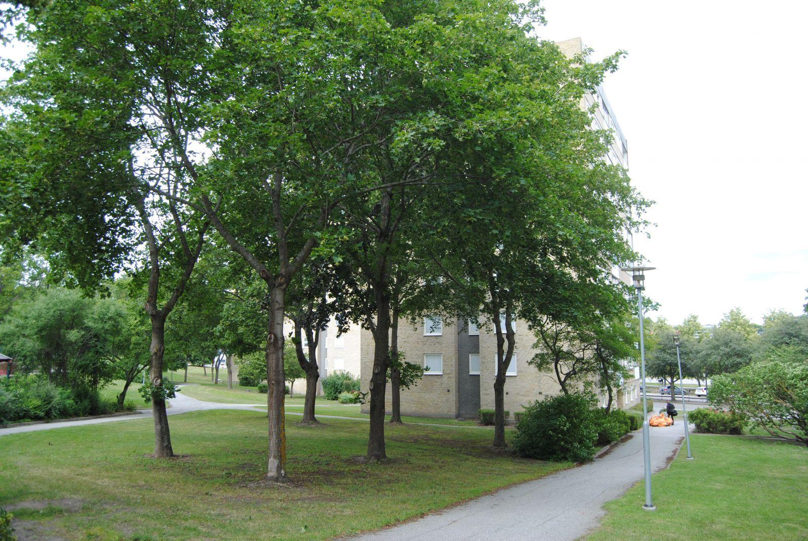 Skön grönska mellan vid Örsvängen 11.