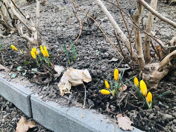 Våren är kommen