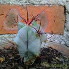 Collecion de CactusNarvaez