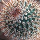 Guilhermecactus-45928