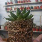 Collecion de ana-cactusin