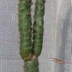 cactus-43260