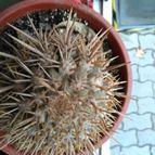 cactus-46493