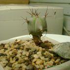 Collecion de cactus