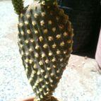 Collecion de cactuseroarg