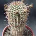 Collecion de cactushansi