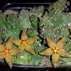 Collecion de digilym