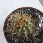 Collecion de leandrocactus