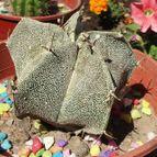 Collecion de misscactus