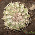 Collecion de nahuelcactusero