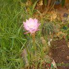 Collecion de pushingcactus
