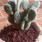 cactus123