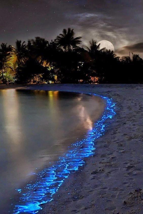 maldivler plankton