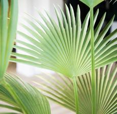 lou de castellane palm
