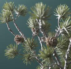 lou_de_castellane_artificielles_artificial_artificiale_fleurs_flowers_fiore_flor_pomme_de_pin_pine_cone_pino