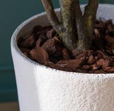 lou de castellane white flowerpot