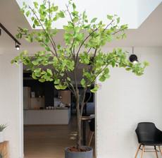 lou de castellane ginko tree and flowerpot
