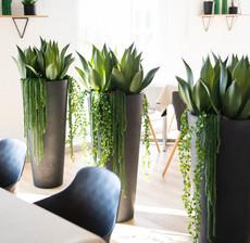 lou de castellane cactus, succulent and flowerpot