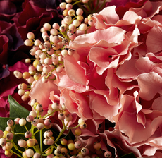 hortensia zoom