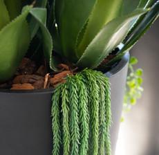 lou de castellane agave du desert and vegetal plant